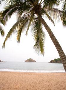 Beach Bungalows Playa Rosa