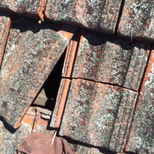 cracked-terracotta-roof-tile-thumb