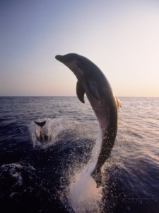 dolphins-jumping-in-the-ocean